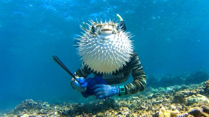 Pufferfish, photobomb